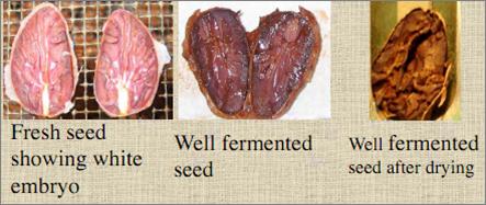 Fermented beans